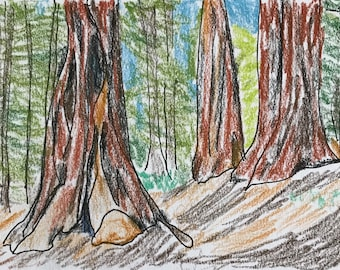 Redwoods of Humboldt County