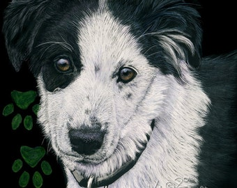 English Shepherd Puppy scratchart print -Iris