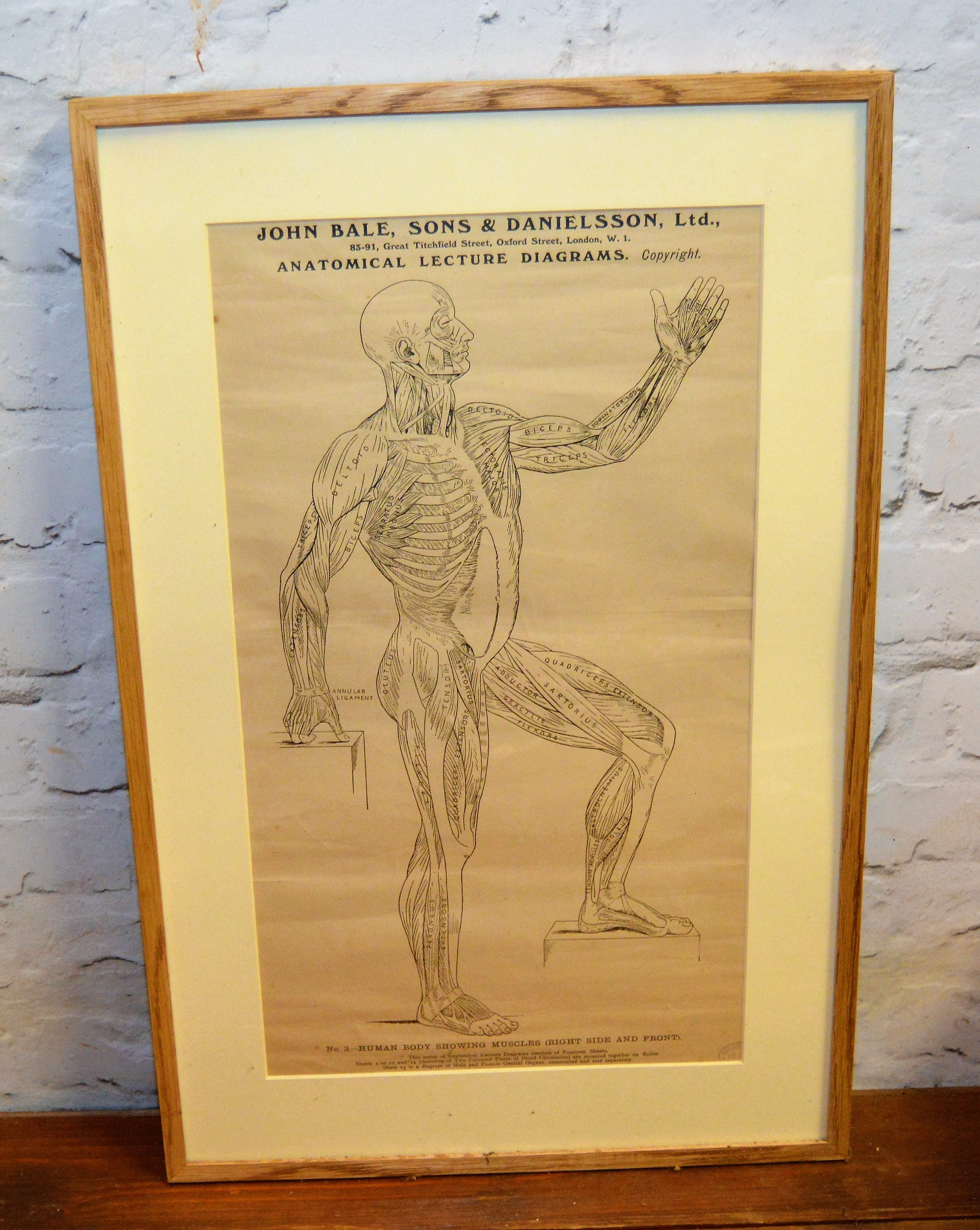Anatomical posters charts medical vintage macabre antique wall