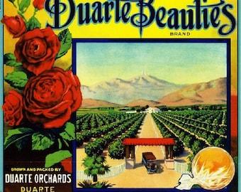 Duarte Beauties Orange Citrus Fruit Crate Box Label Art Print