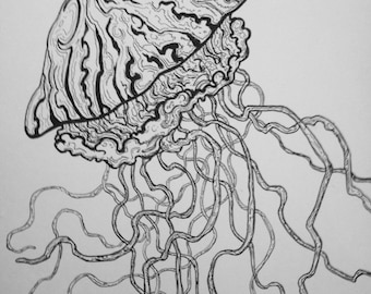 Jellyfish drawing