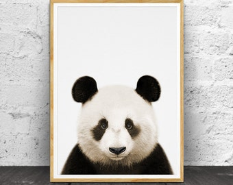 Panda Print,  Panda Wall Art, Nursery Printable, Nursery Animal, Babies Room Art, Printable Panda, Babies Room Decor, Panda Photo Colour