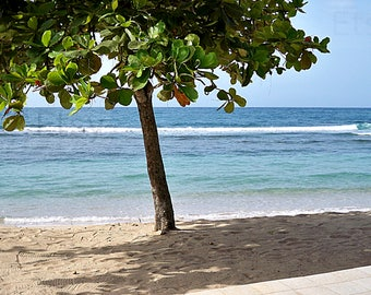 Instant Download Haitian Beach Haiti Cormier Beach Resort Ocean Almond tree photo picture Printable art print  Stock photography Stock photo