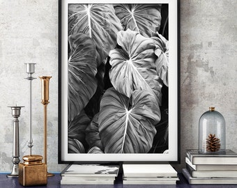 Elephants Ear Leaves Print, Black and White Photography, Tropical Print, Print, Botanical Print, Wall Art, Posters, Prints, Photography,125b