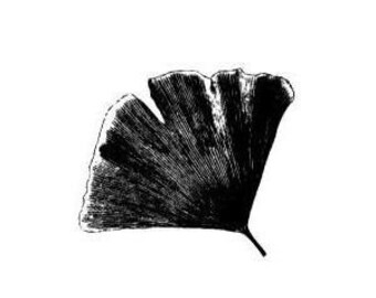 GINGKO LEAF unmounted rubber stamp, Asian, Japanese, Chinese, oriental, nature, Sweet Grass Stamps No.12