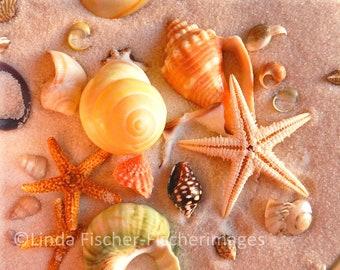 Colorful Seashells in Sand Nature Wall Art Home Decor Digital Download Shells Starfish Fine Art Photography Linda Fischer Fischerimages