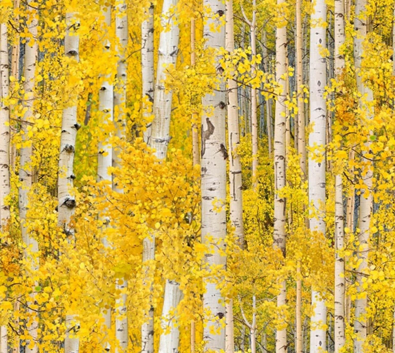 Sale** Quilting Landscape Fabric\'**Golden Aspen Trees 491**fabulous ...
