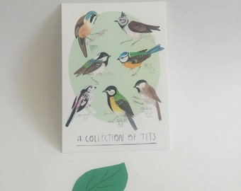 Collection of Tits Postcard