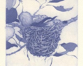 Warbling Vireo Nest, Original Fine Art Etching