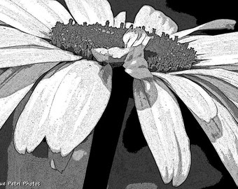 Black and White Photography, Cottage Chic, Shabby Chic, Hippie Chic, Black and White Flower Art, Romantic Decor, Daisy, Gifts for her