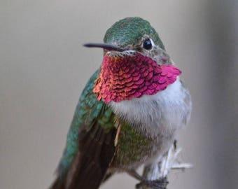 Hummingbird Print, Hummingbird Photo, Bird Photography, Nature Photography, Desert Photography, Nature Print, Photography, Desert,Wall Decor