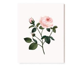 Botanical Scented Card - Rose