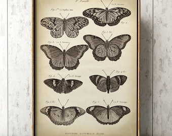 Butterfly print, Butterfly poster, butterflies wall decor, scientific butterflies study, antique butterfly, black and white print