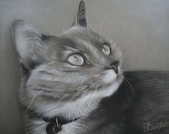 CUSTOM Cat Drawing -  From your photo - 8x10 -  Realistic Hand drawn fine art - Charcoal portrait - Feline, kitten, pet portrait