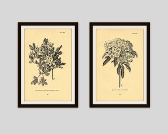 Any 2 Botanical Prints, Set of 2, Antique Botanical, Botanical Print Set, Set of Prints, Cottage Decor, Rustic Floral, Neutral, Wildflower