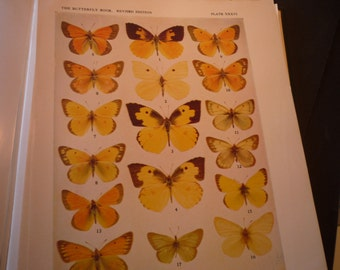 Butterflies - 2 plates Parnassius and Eurema - 1945 color plates - yellow and orange - vibrant color prints - framable W J Holland
