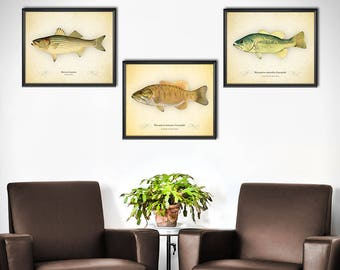 Bass Fishing Decor   Set Of 3   Bass Fishing Wall Art   Bass Fish Wall