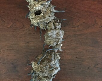 Weird Root or Insect Nest, Oddity, Natural Oddity