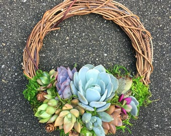 "6"" Living Succulent Wreath (Made-to-Order)"