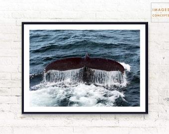 Whale Print ~ Whale Wall Art ~ Nature Print ~ Ocean Photography ~ Digital Print ~ Printable Art ~ Nautical Art ~ Ocean Decor ~ Home Decor
