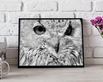 Owl poster, Owl art, Owl decor, Owl print, Bird poster, Bird art, Bird decor, Bird print, Gift poster