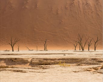 Deadvlei Desert Namibia | Fine Art Photography Print | Desert Artwork