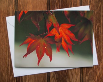 Flower Greetings card C6 - Maple Leaf