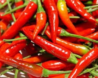 Organic Non-Gmo Thai Dragon Hot  Pepper vegetable seeds. Very hot chilies,perfect for thai and Vietnamese cuisine.