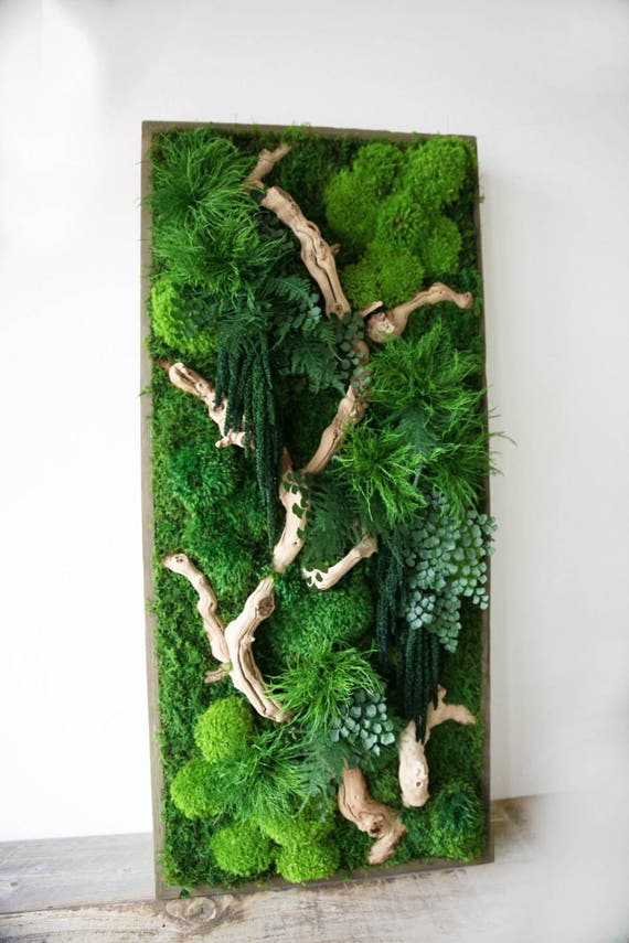 40 X 18 Artisan Moss 174 Real Preserved Plants In