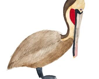 Brown Pelican Original Watercolor Painting 10x10
