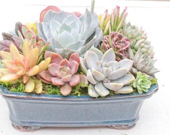 """Succulent arrangement in 10"""" bonsai container/bowl-Large"""