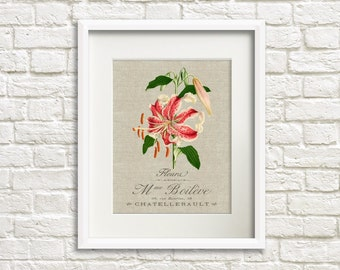 Linen Lily - Botanical Artwork, Floral Art Prints, Farmhouse Chic Style Decor, Star Lily Flower, French Country Decor, Wall Art Home Decor