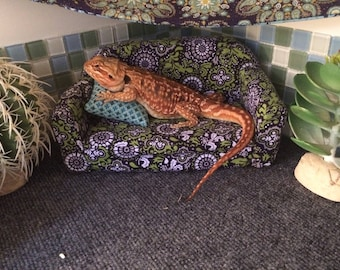 Small bearded dragon couch