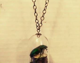 Mini beetle terrarium necklace