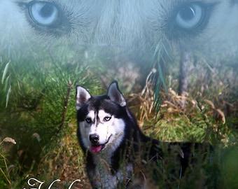 Fleece Blanket Blue Eyed Husky or Throw