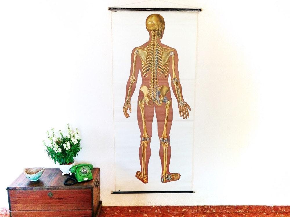 Vintage menschlichen Körper Lehrtafel Jahrgang Deutsch