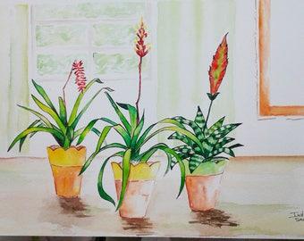 Interior Garden. Bromeliads. Original watercolor