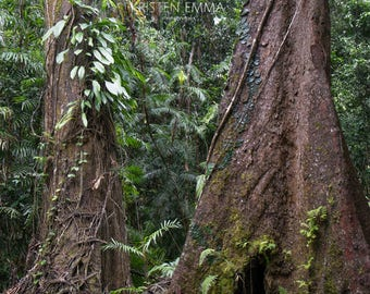 In the Daintree Forest | Port Douglas, Australia~ Nature and Landscape, Abstract, Tree, Wilderness, Jungle, Rainforest, Green, Forest,