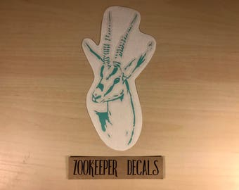 Thomson's gazelle, Gazelle, Tommie, African animals, Hoofstock, Zookeeper decals, Zookeeper, Zoo love, Animal decals, Decals, Horns