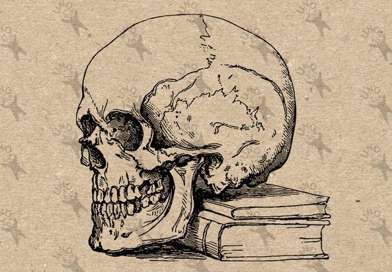 Vintage retro dibujo libro de anatomía de cráneo humano imagen