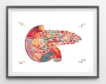 Pancreas watercolor print human anatomy internal organs pancreas poster medical art wall decor anatomy art gift pancreas print