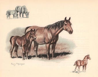 Brown Saddle Horses Mares and Foals Color Print by Edwin Megargee - Book Plate - Baby Horse Vintage Wall Hanging