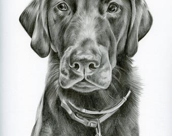 Custom Black and White Pencil Drawing size 9 x 12, Custom Pet Portrait, Custom Pet Drawing, Dog Art, Dog Portrait, Pencil Drawing, Graphite