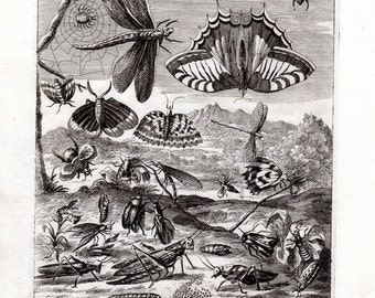 1694 Kip Blome Insects Antique Insect Print BUTTERFLIES GRASSHOPPER Copper Plate