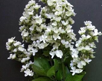 "23"" Lilac bush"