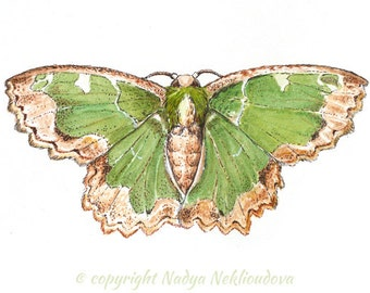 Green Moth original painting 5x7 inches (12x18cm) watercolour, natural history, original art, butterfly collection, nature decor