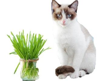 Cat grass oat (100 thru 25,600 seeds select) Cat Dog Bird digest aid health C22
