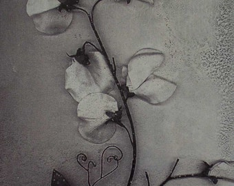 Metal photo art Sweet Pea in Winter 5x7in