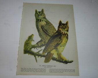 Great Horned Owl / Passenger Pigeon bird prints from 1946 John James Audubon book, Birds of America - Frameable, Collectible Print     31-53