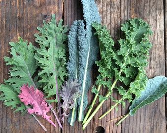 SALE! Kale Mixed Varieties Carolyn's Best Mix of Heirloom and Open Pollinated Kale Seeds Grown To Organic Standards